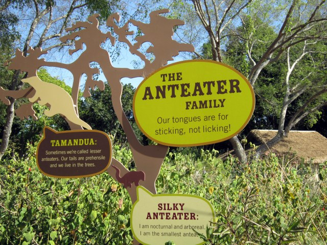 The anteater was my favorite.